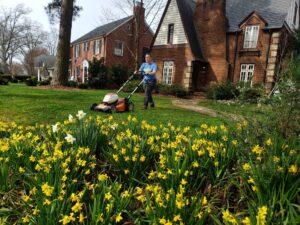 organic lawn fertilizer Westford, MA